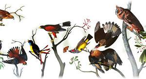 Doodle fêtant le 226ème anniversaire de Jean-Jacques Audubon